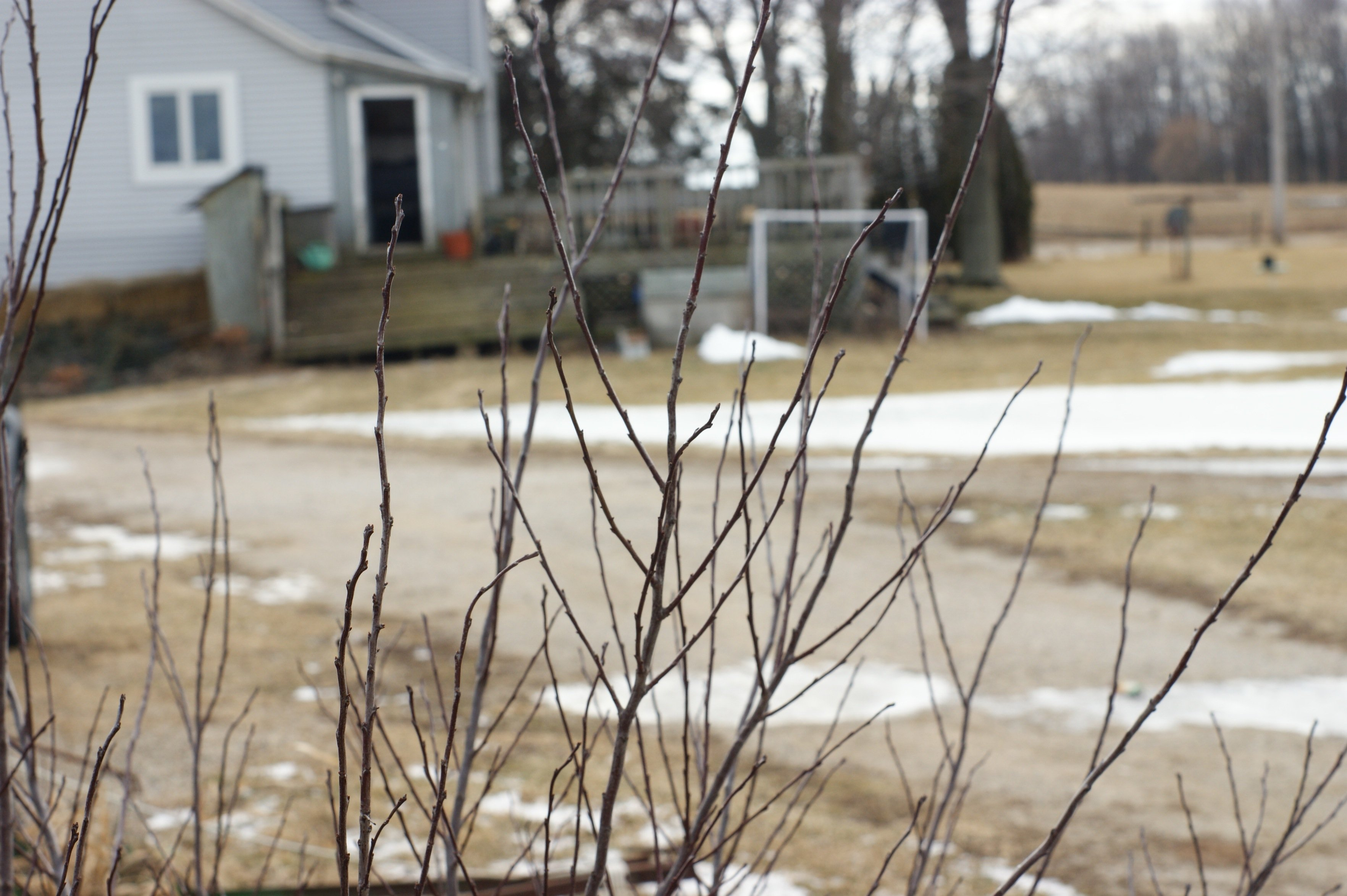 Branches in front of farm house