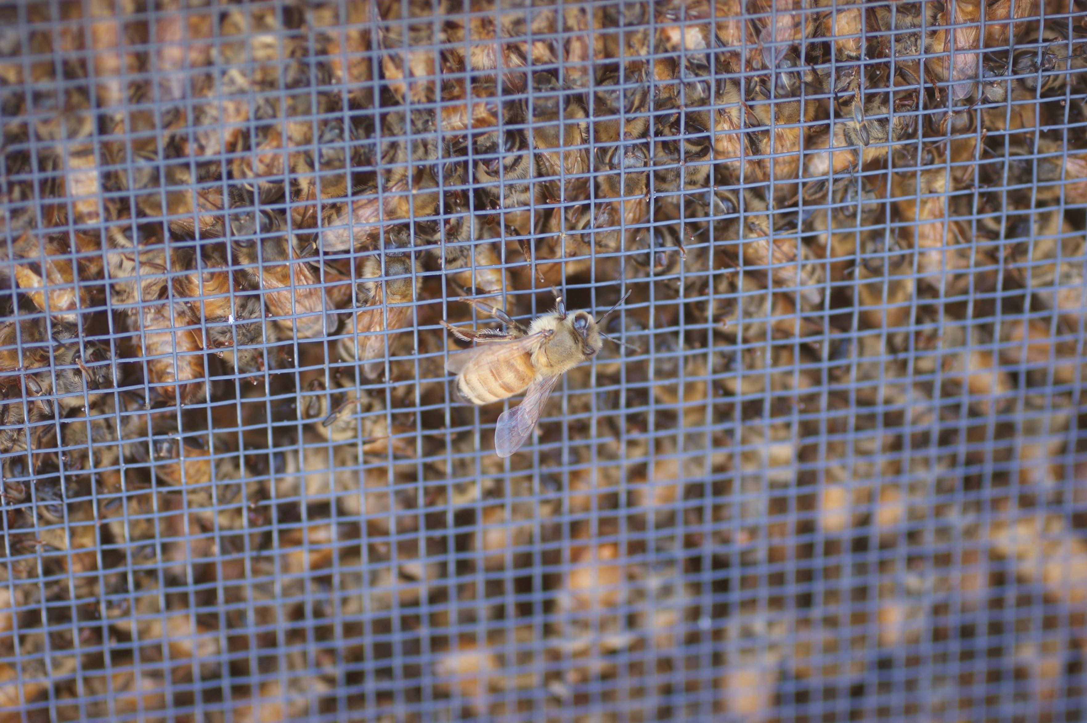bees up close The last couple of days...