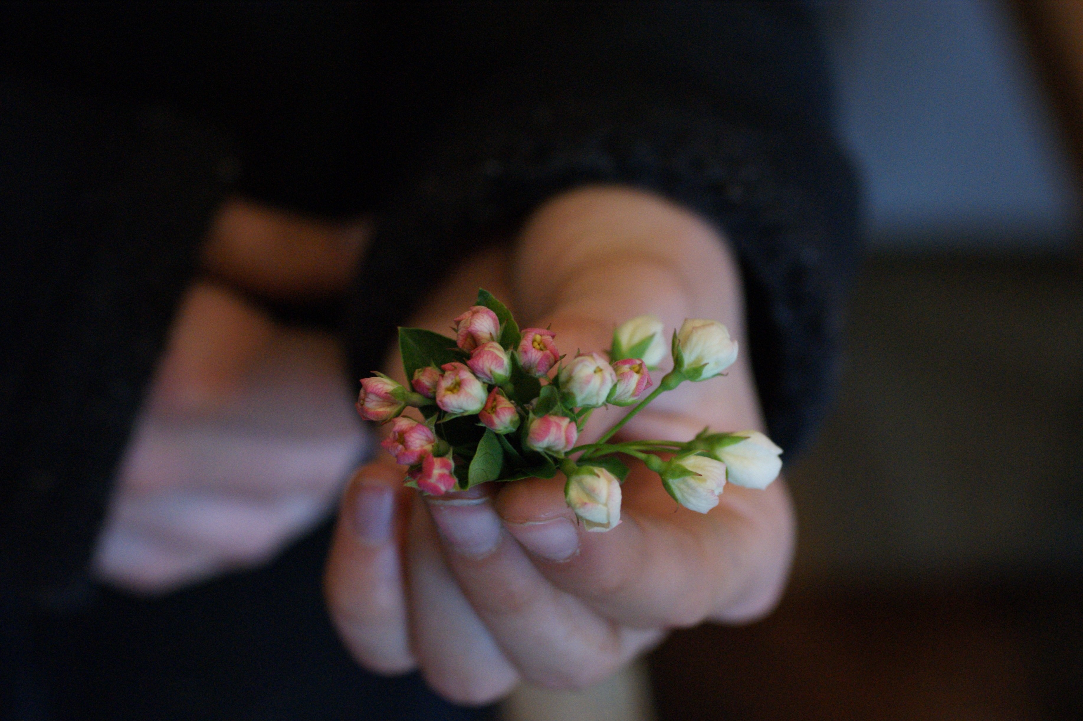holding apple blossom The last couple of days...