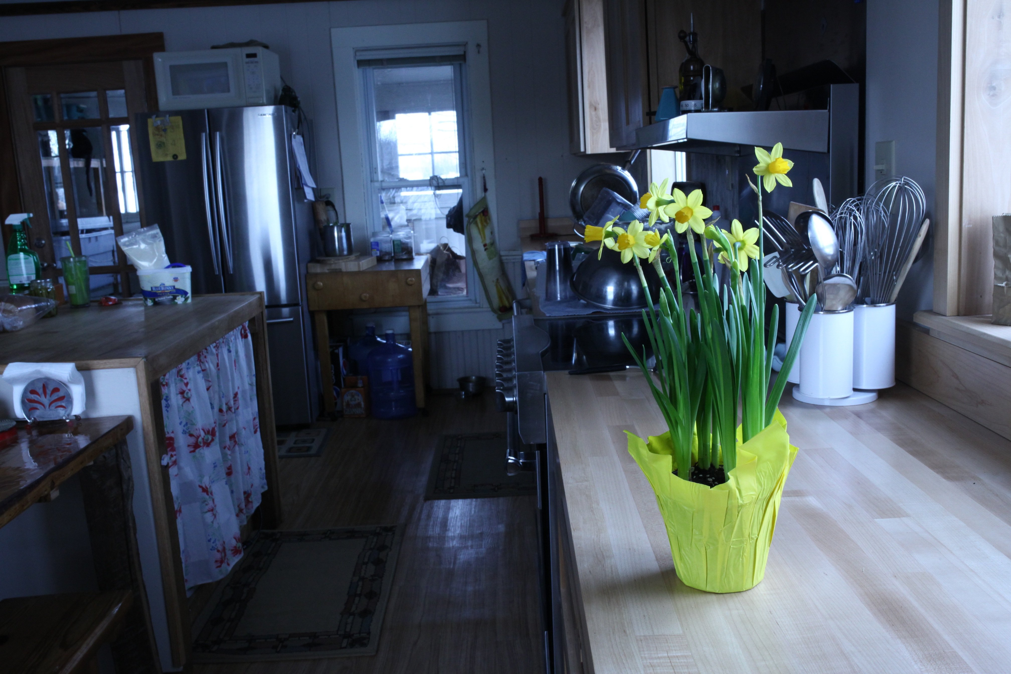spring bulbs in kitchen