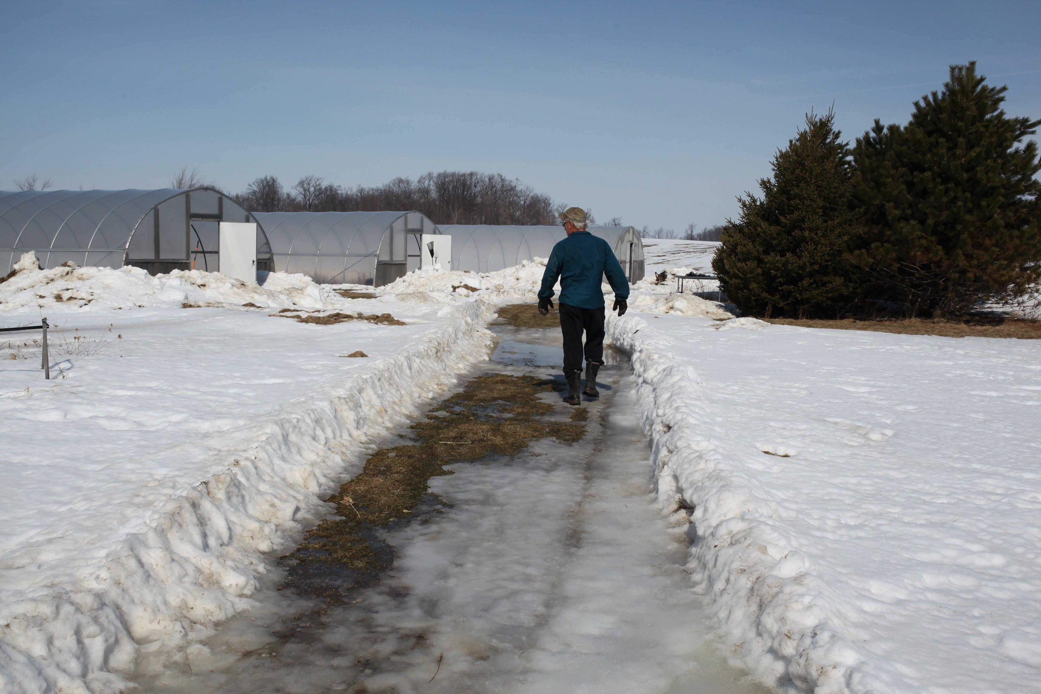 Richard walking to snowy greenhse