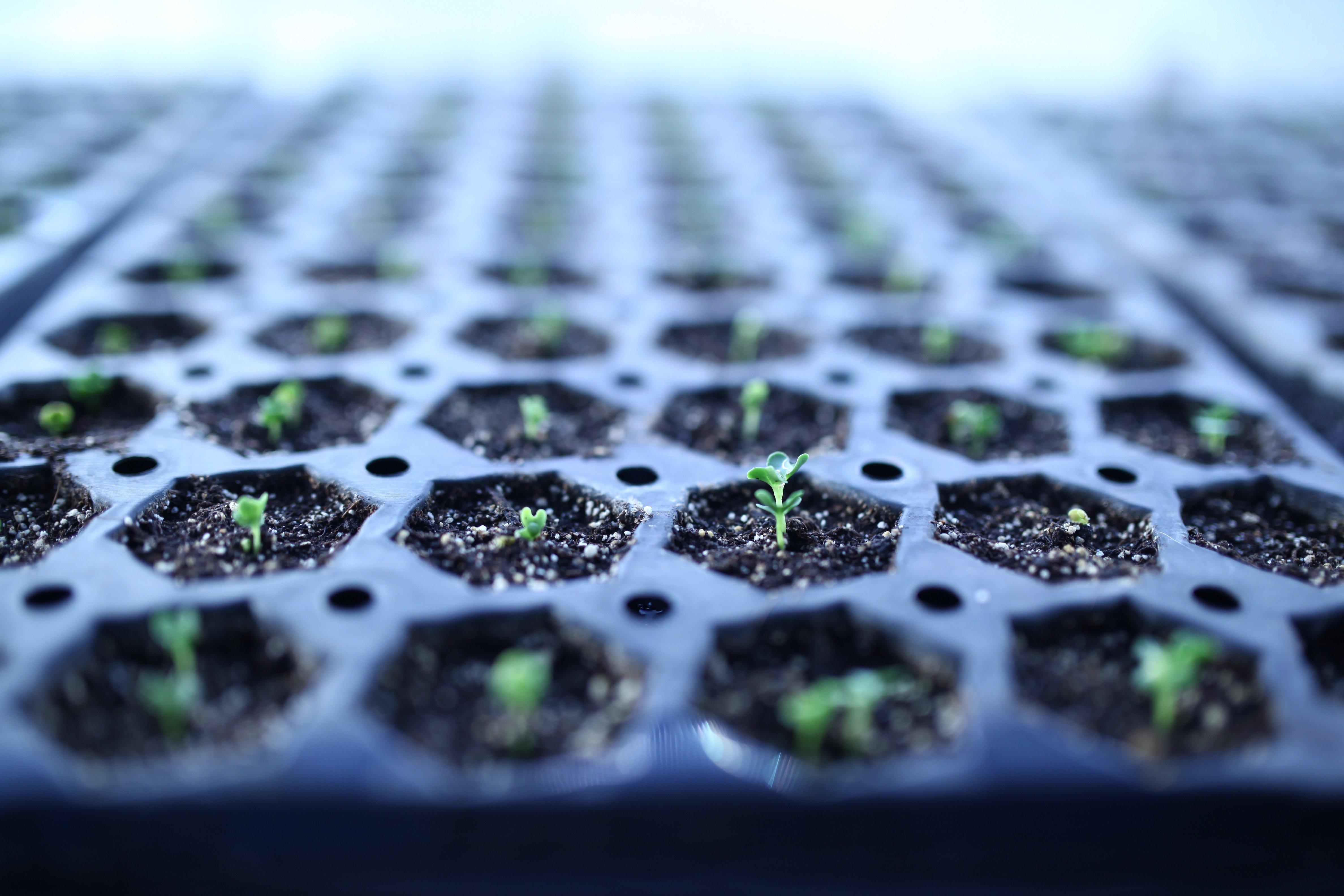 first Kale seedling