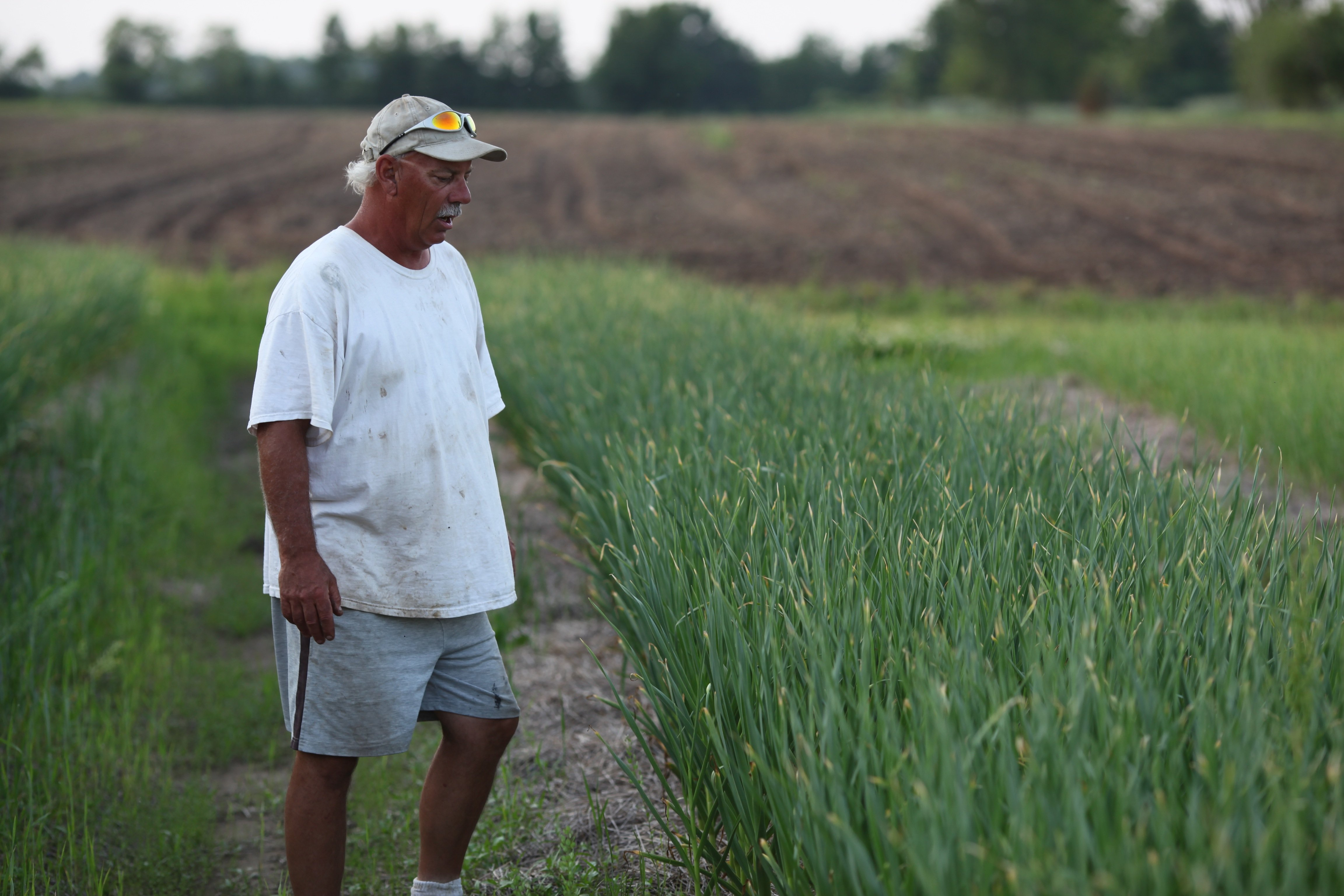 RAB checking out garlic in June