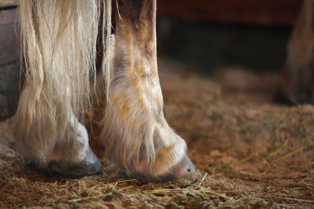 horses hoofs