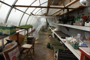 inside nursery greenhouse