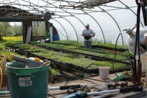 richard in greenhouse, owosso organics