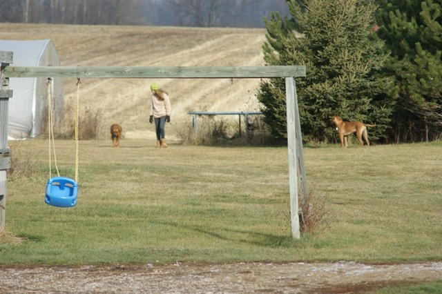 Cody walking dogs