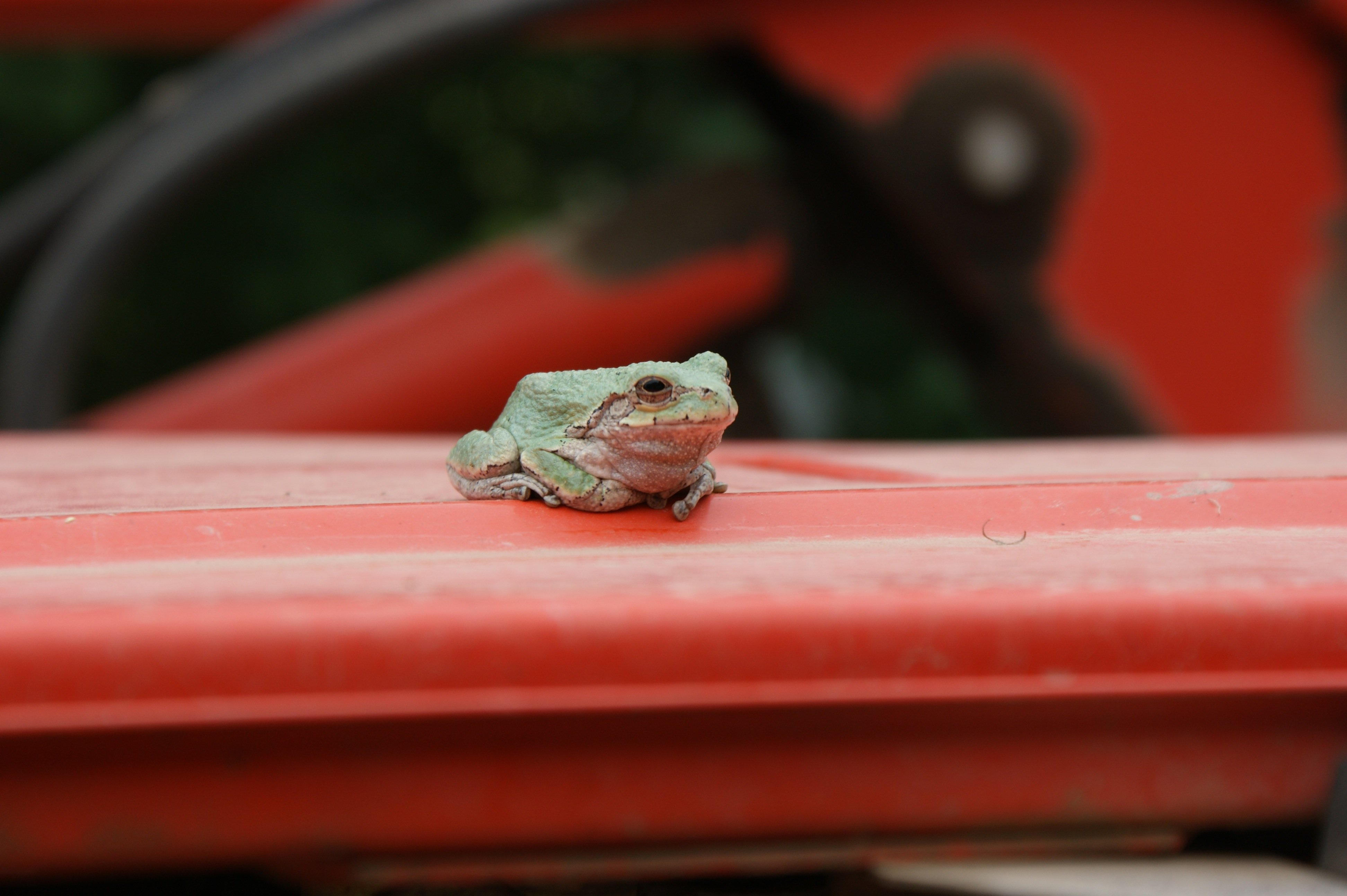 Frog on tractor