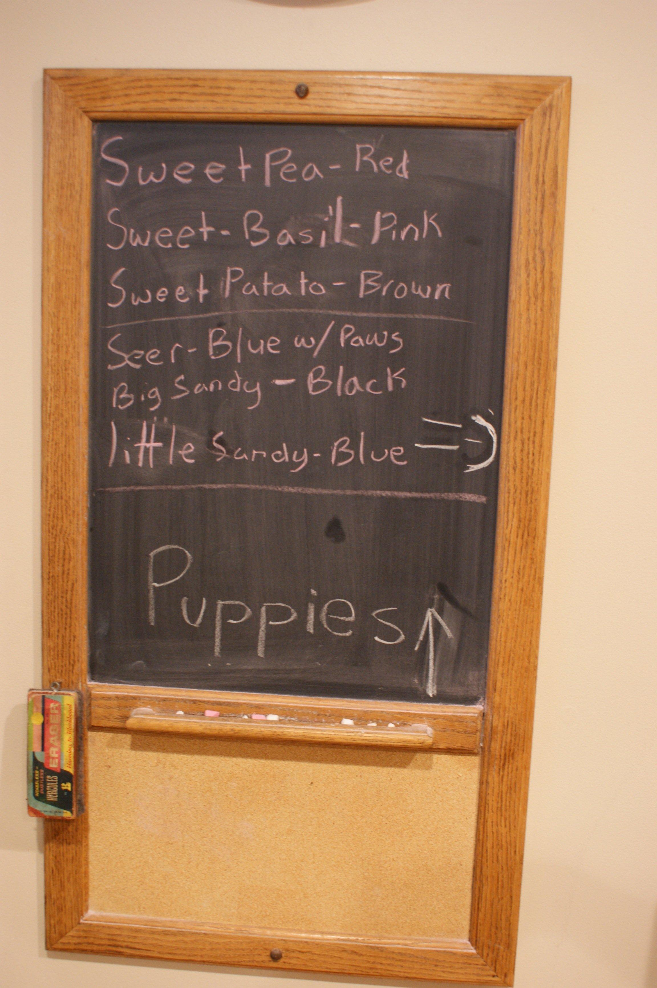 The puppy board