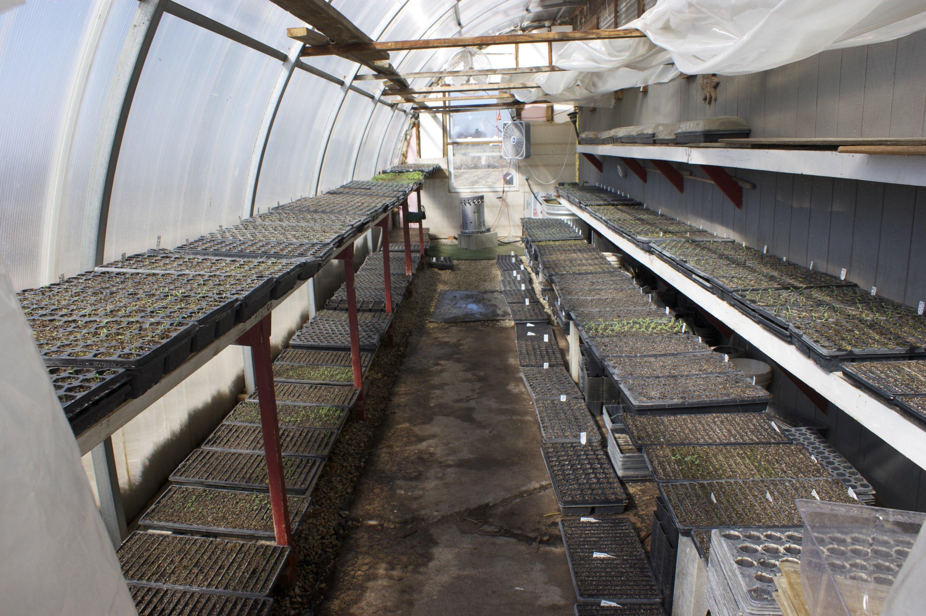 nursery greenhouse in march