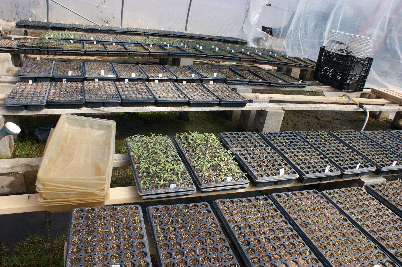 Quonset greenhouse