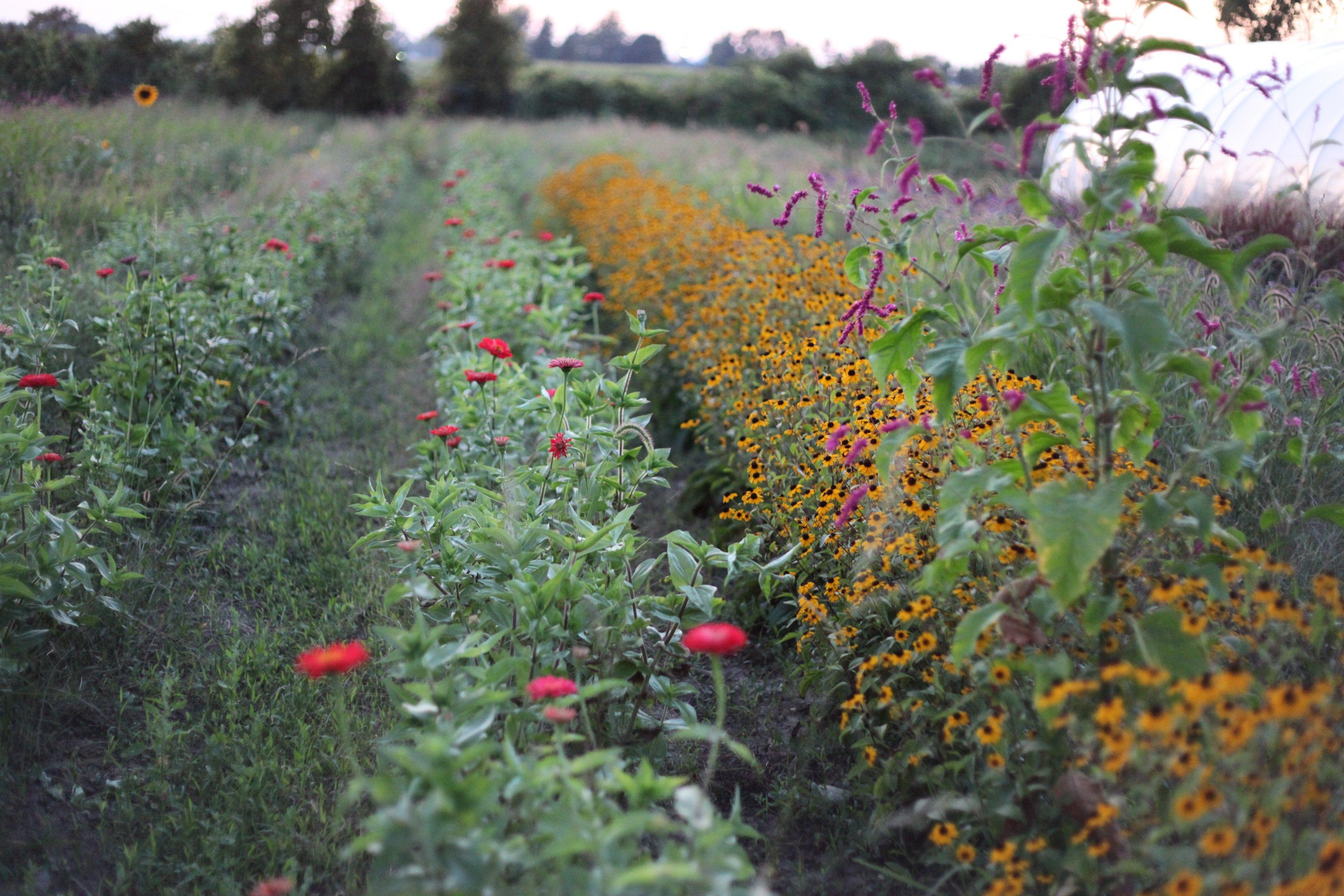 flower grd in sept