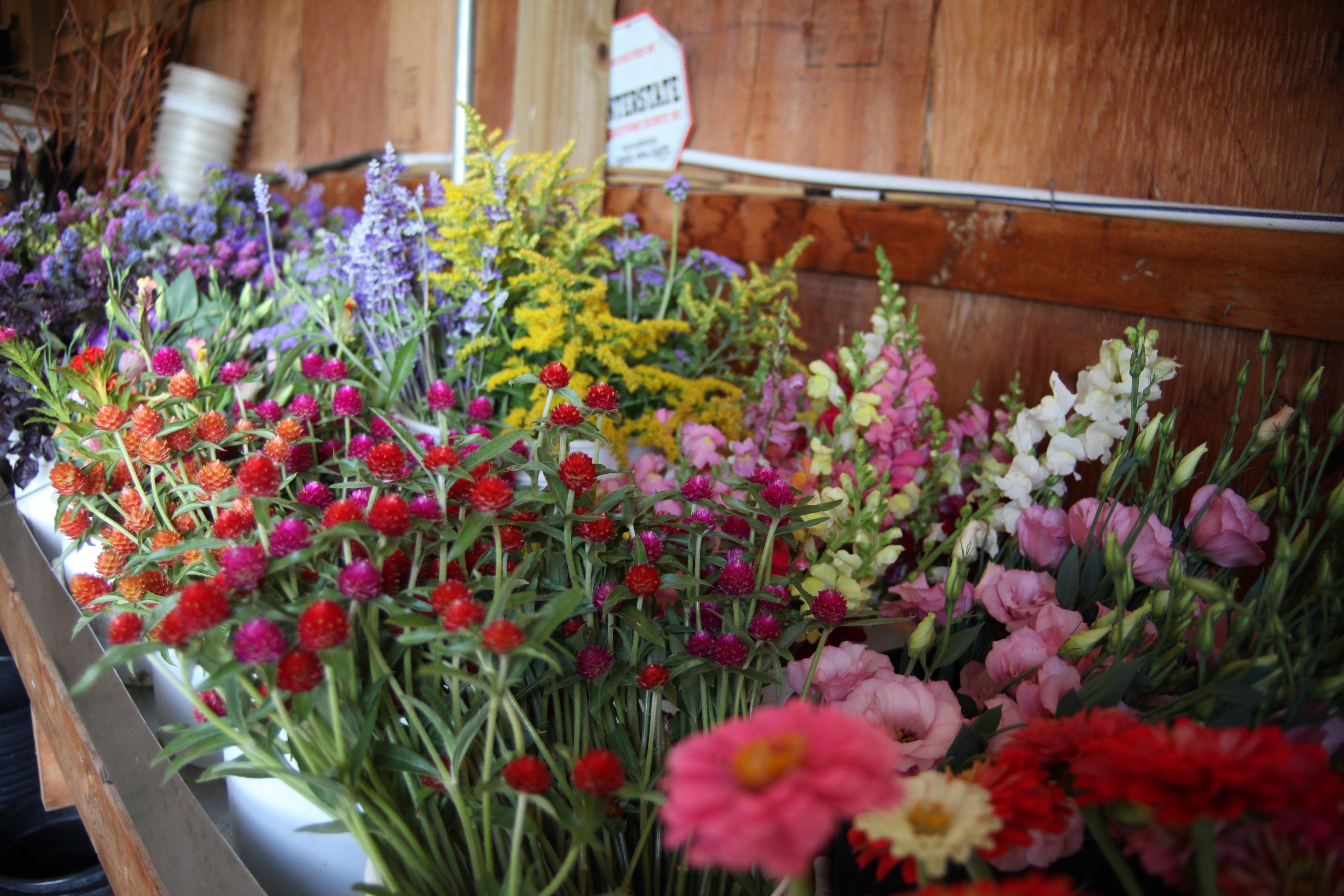 last big fall flower harvest
