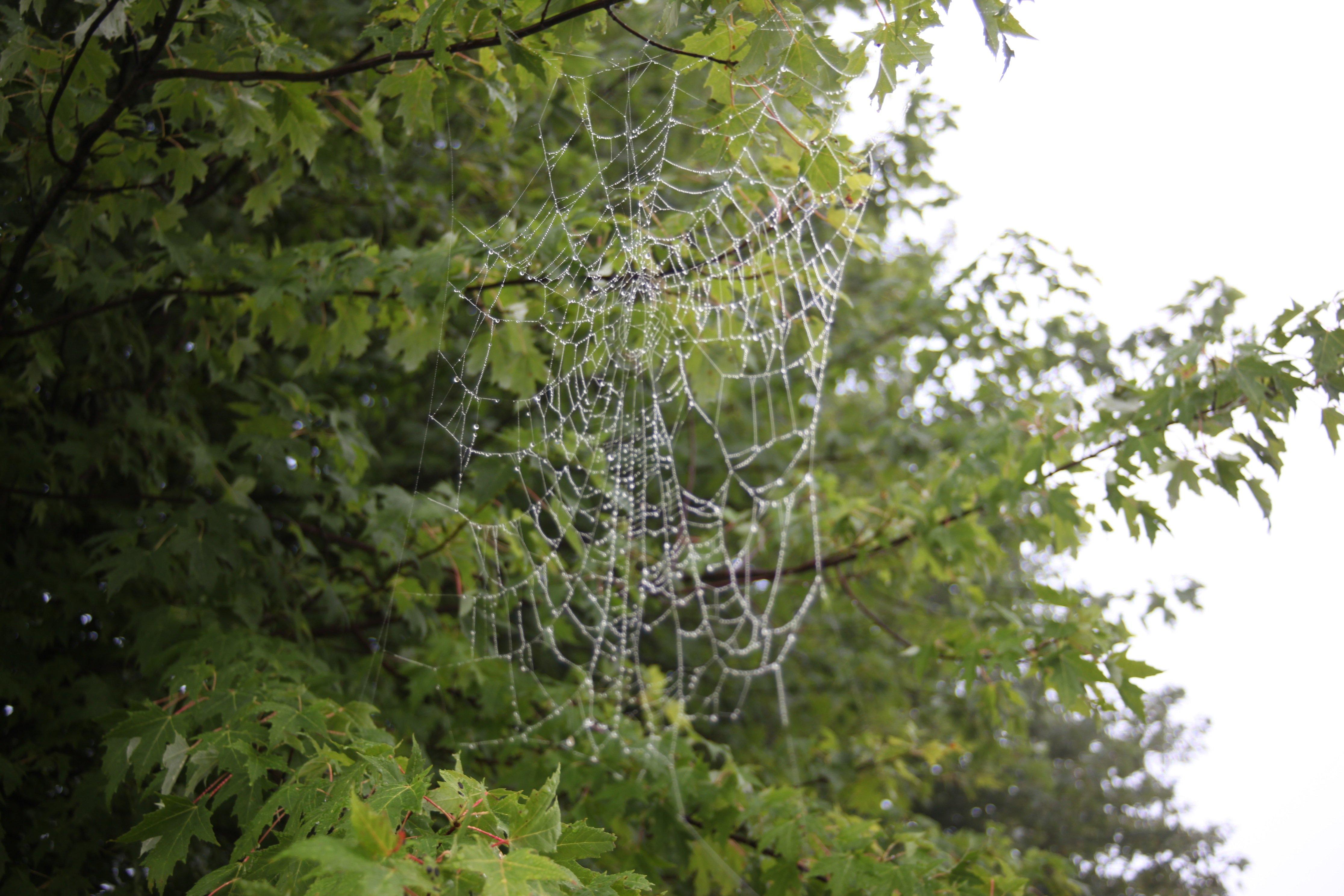 spider web in AM