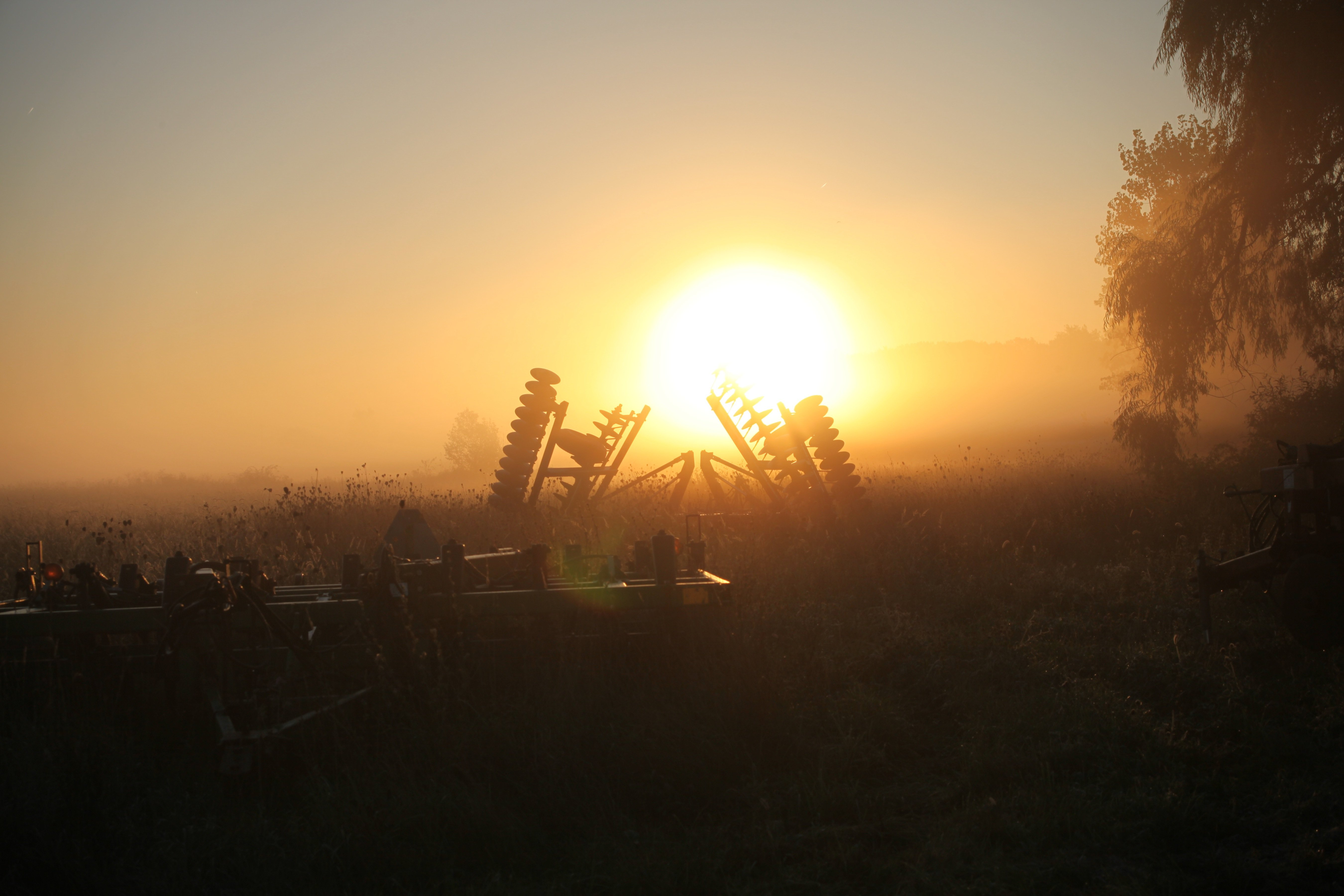 cody: disk and cultivator with flare