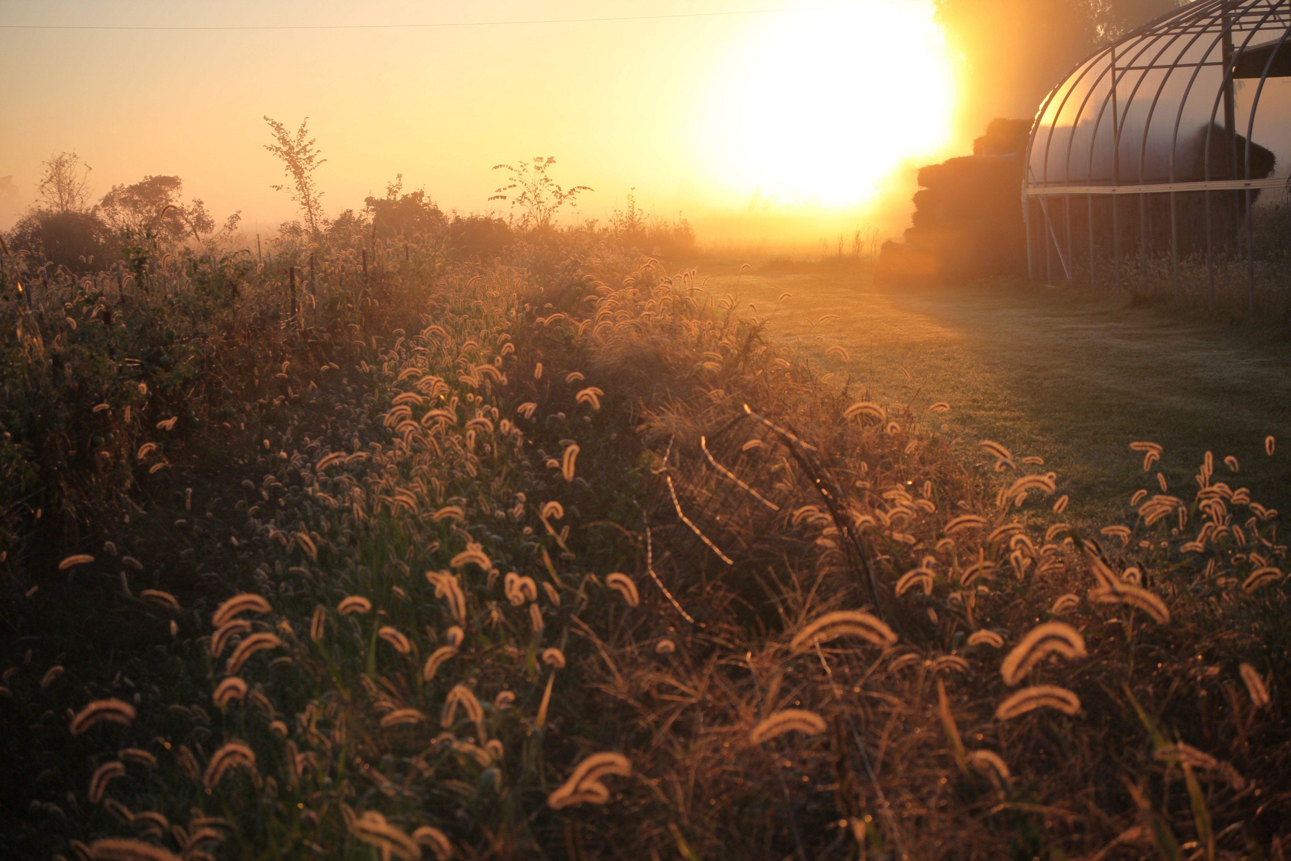 cody: winter greenhouse