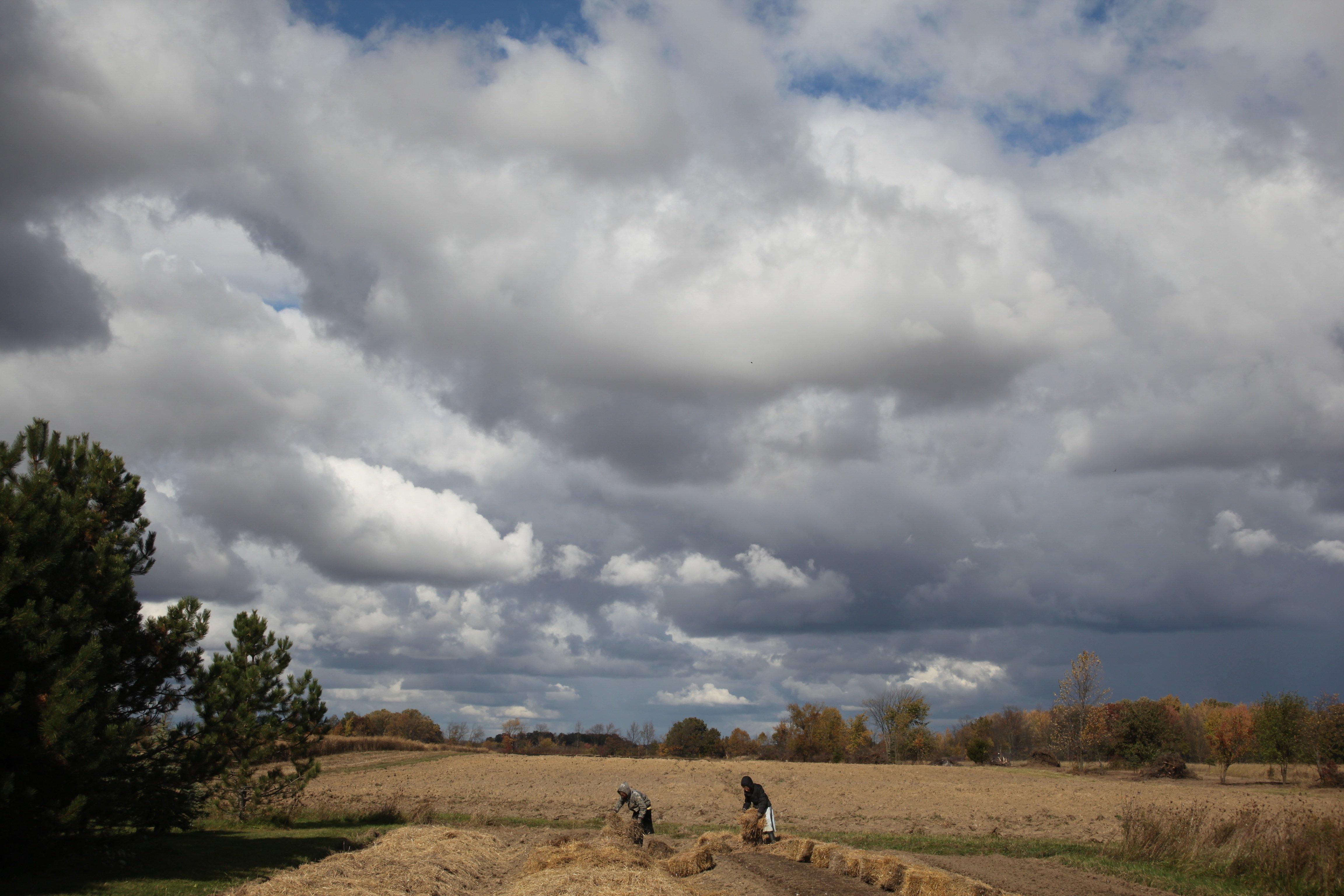 planting garlic w: big sky