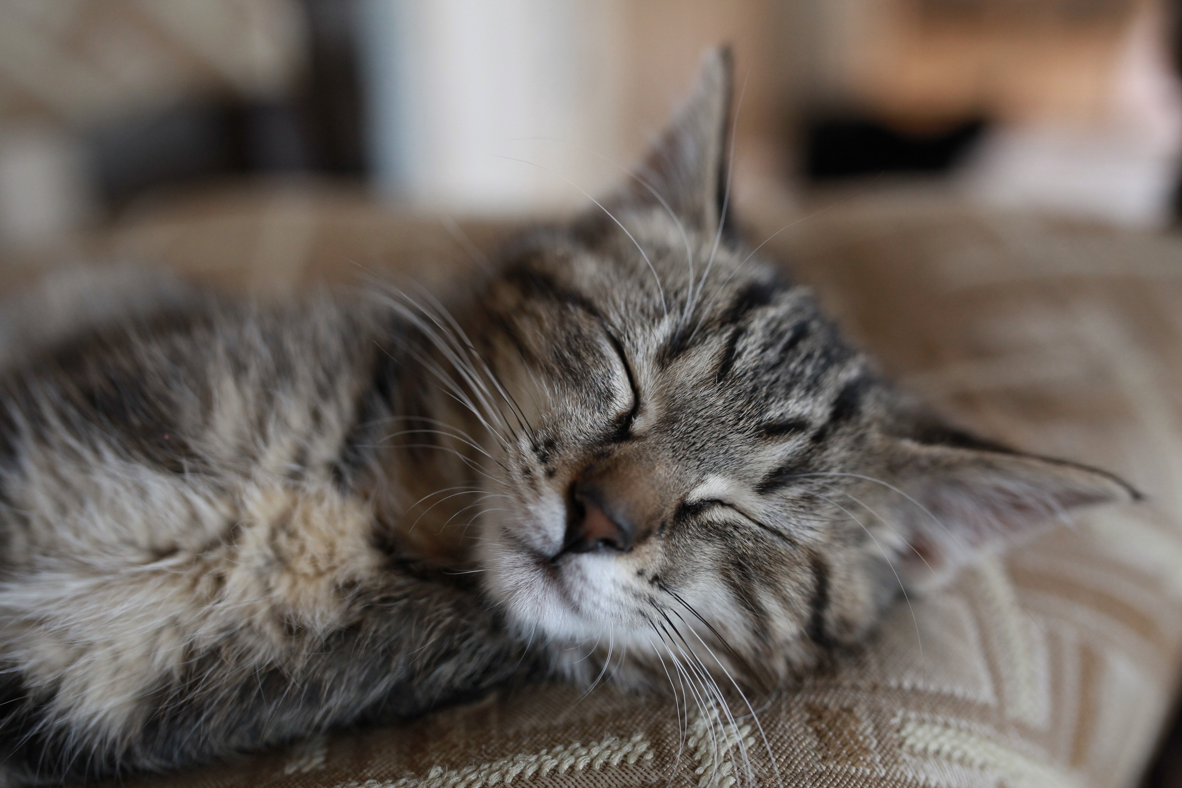 sleeping Jolie Dec