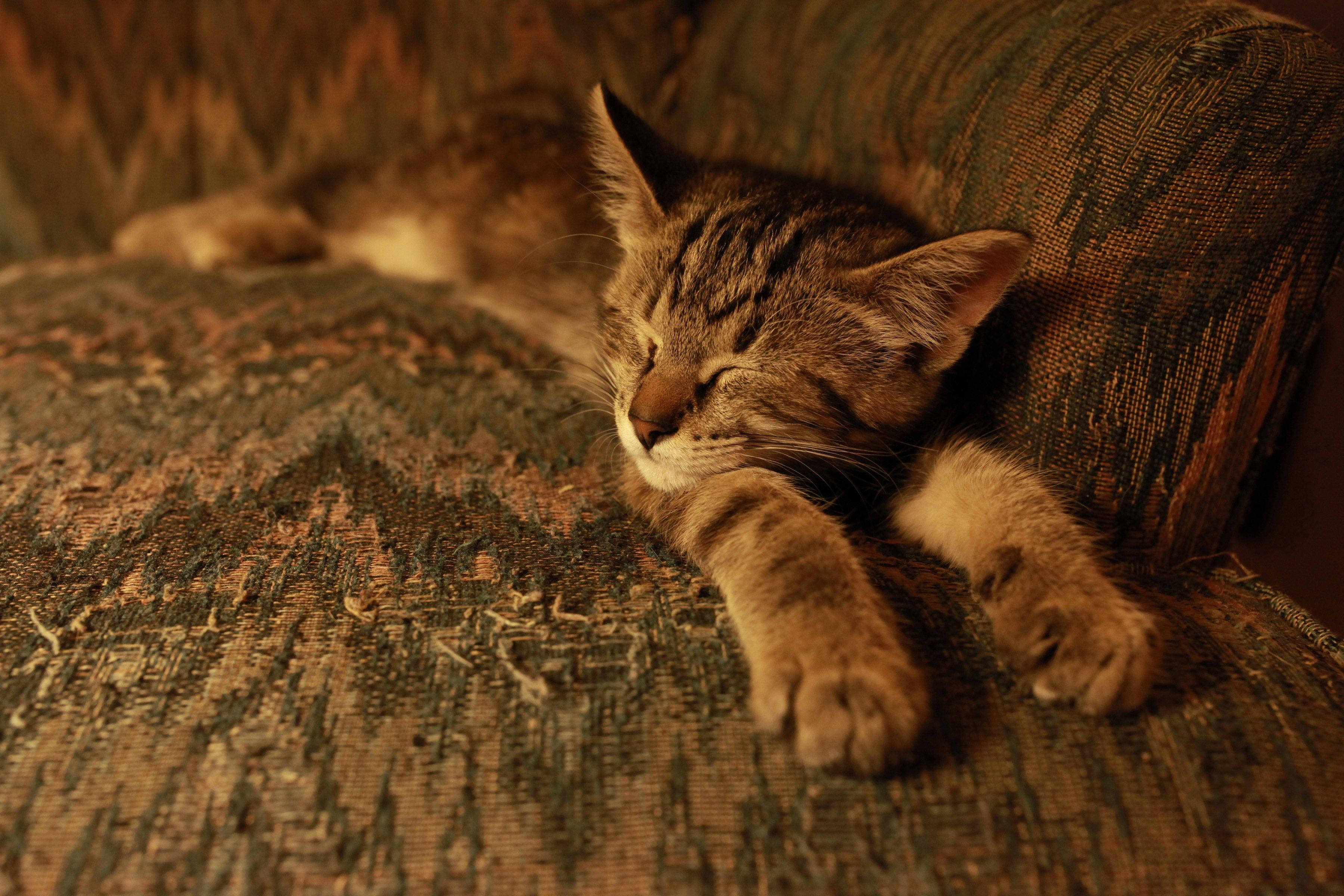 sleeping jollie in Na Na chair
