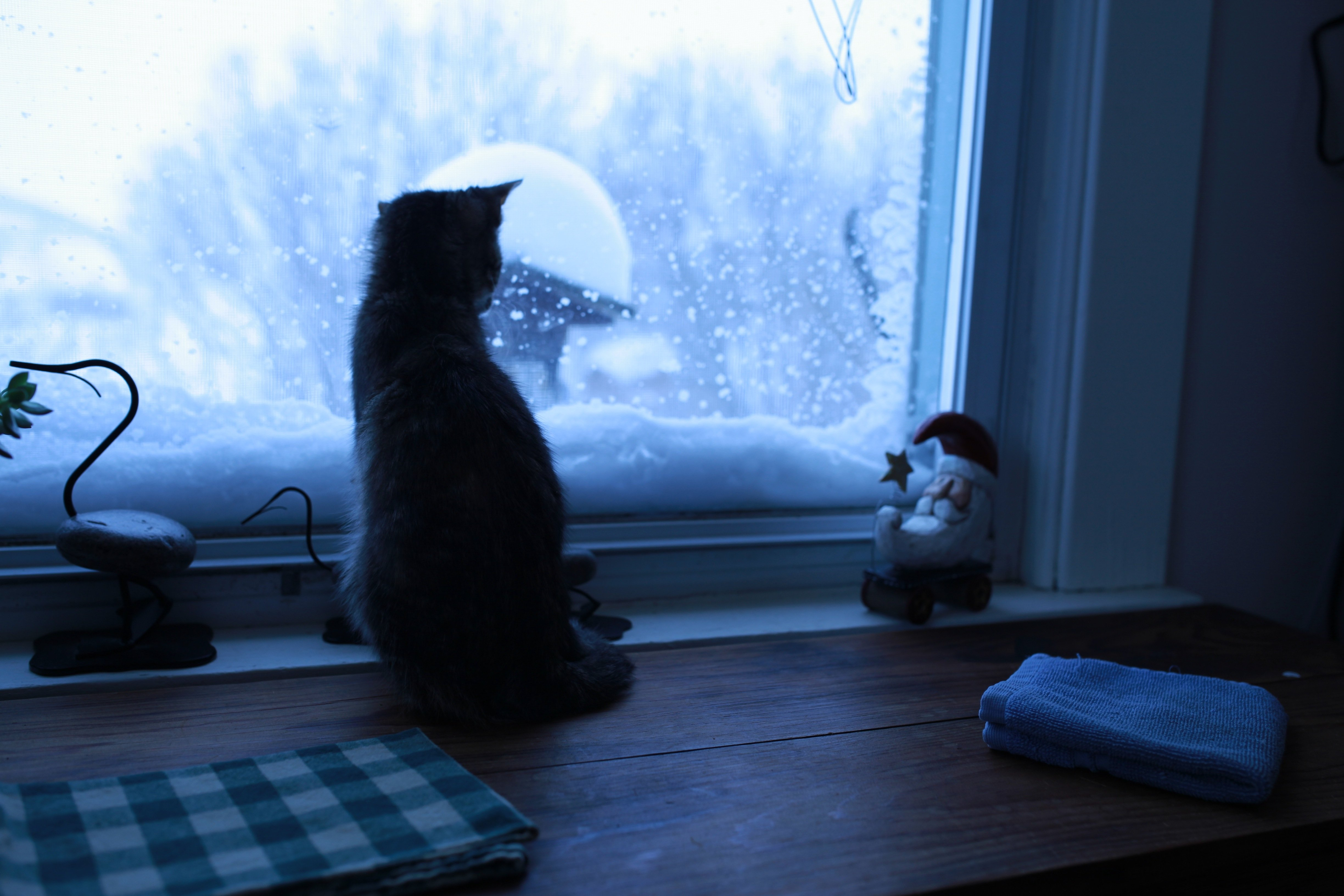 Jollie watching snow