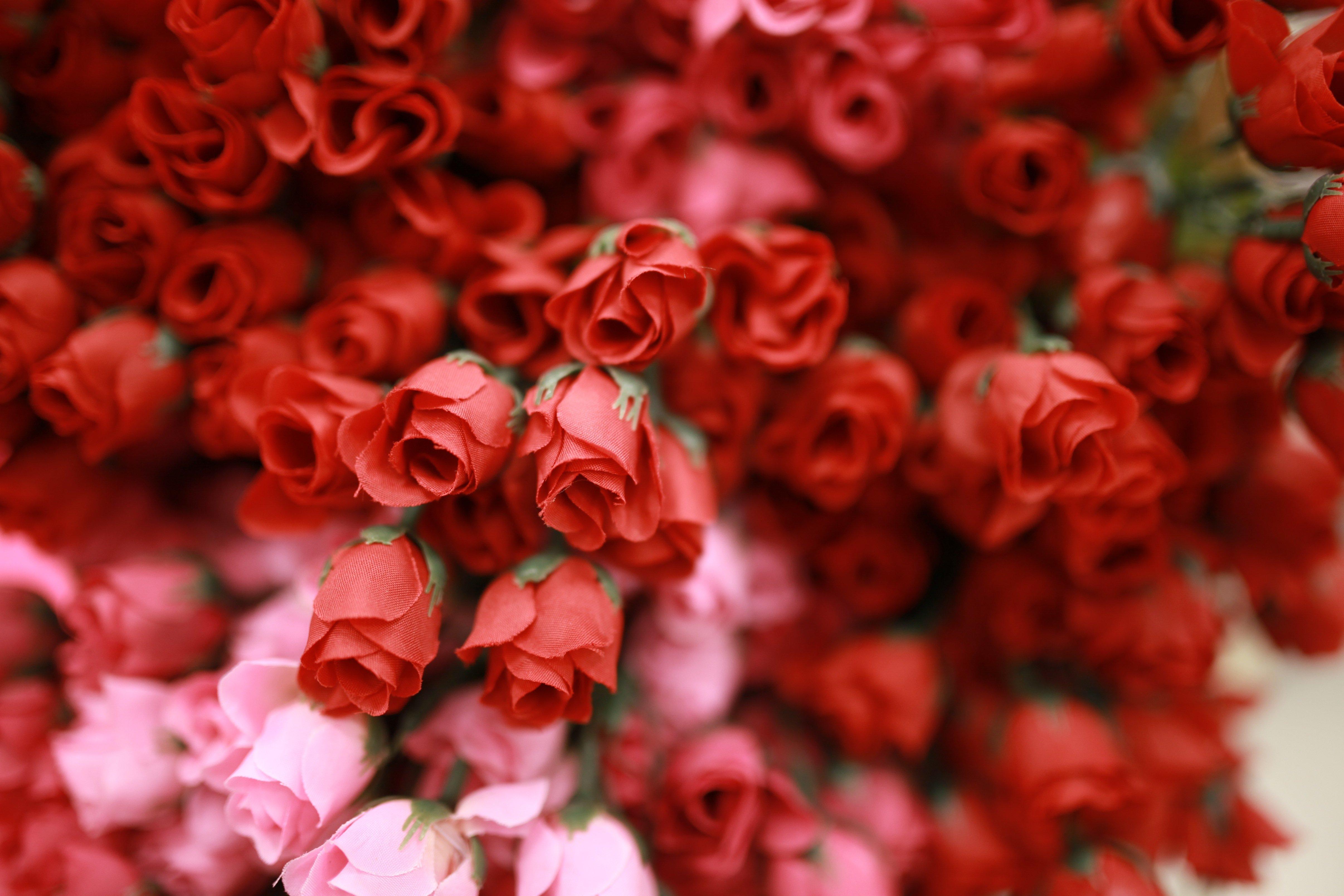fake roses close