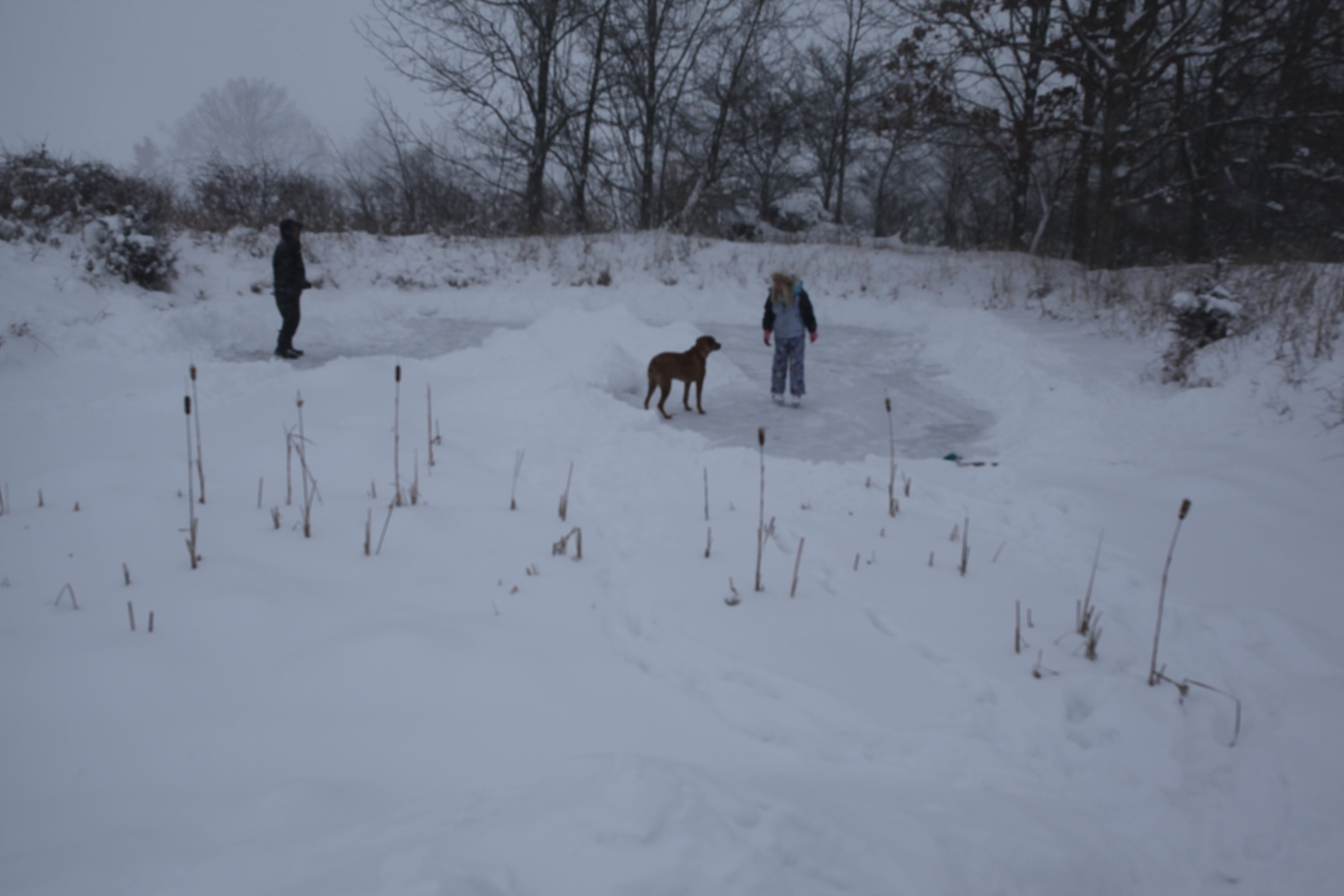 shoveling the pond #2