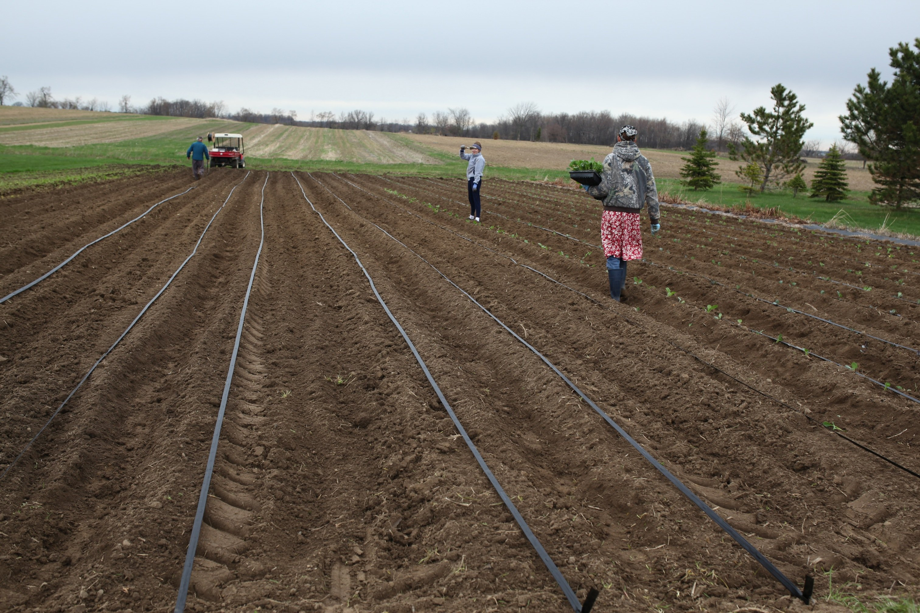 group planting in Field of Dreams in May