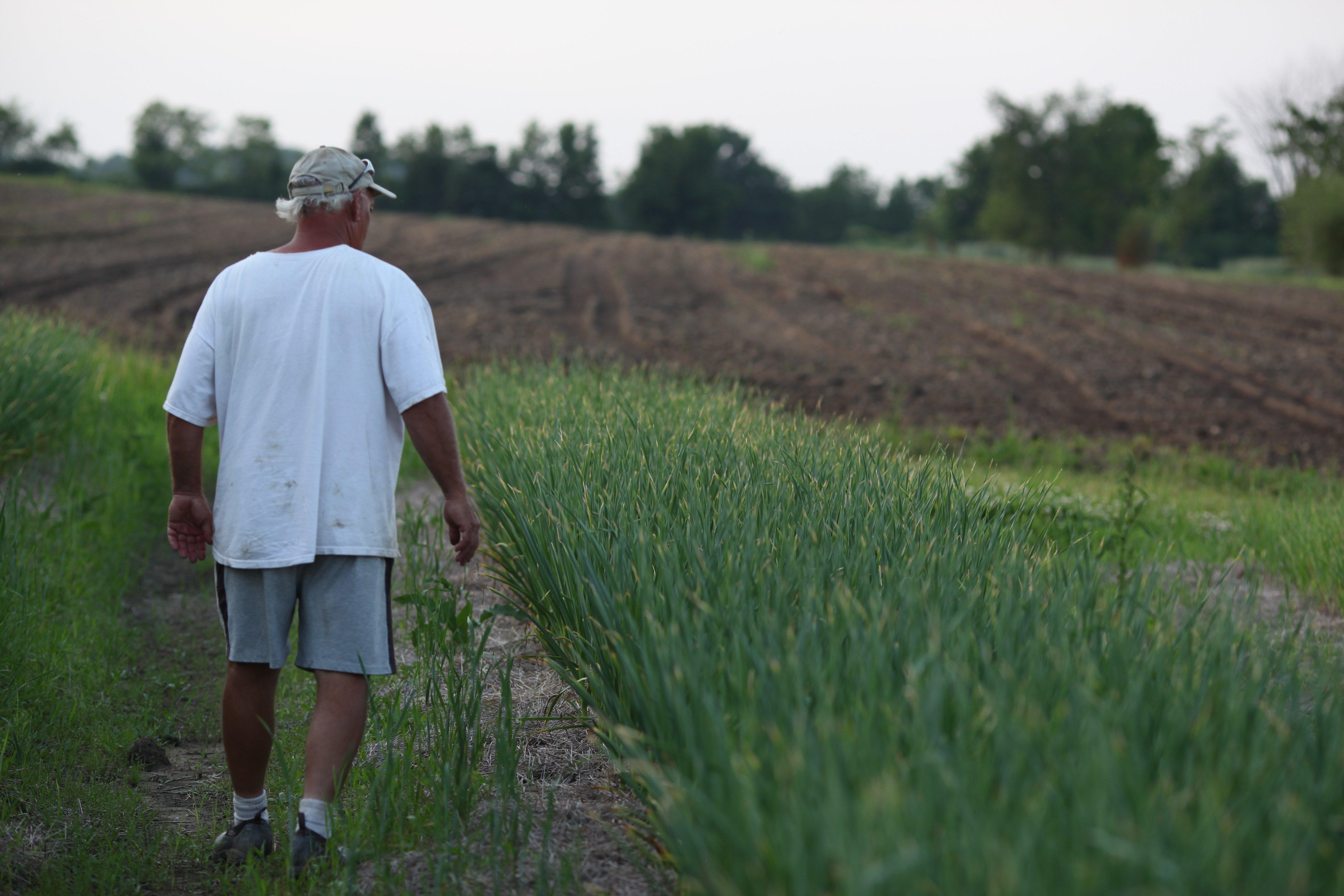 RAB walking the garlic