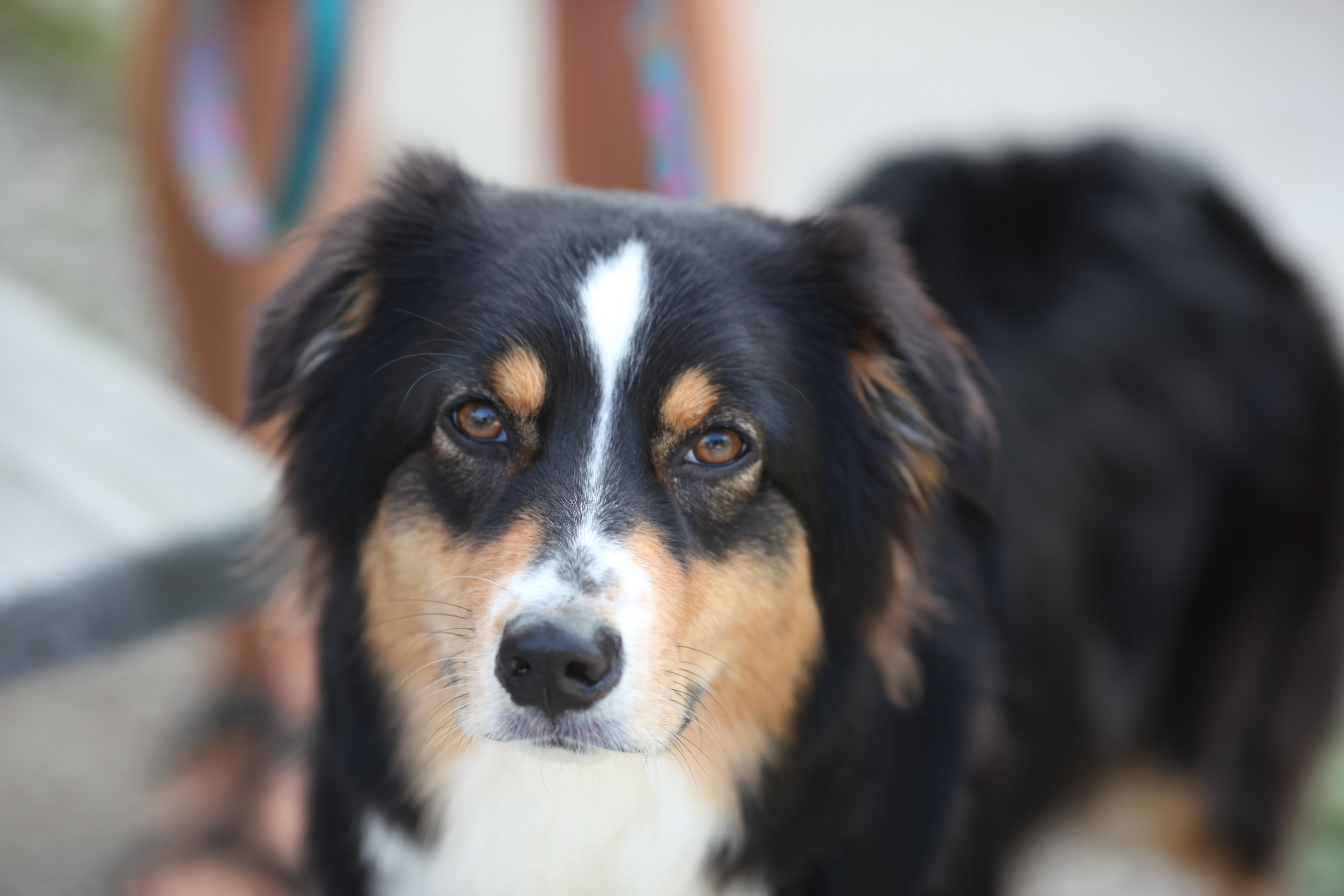 7-19 meridian fav dog