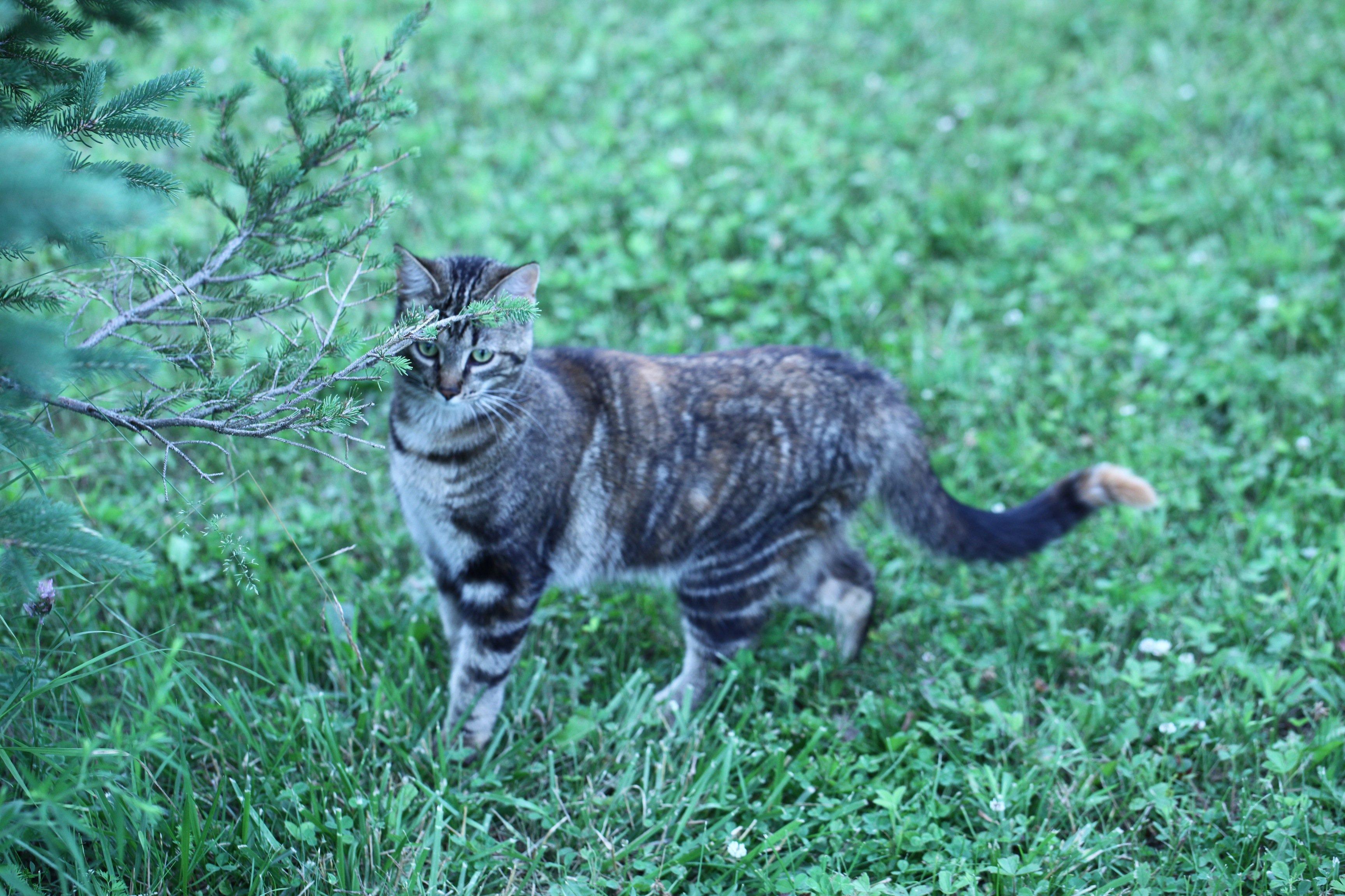 Jolie the wonder kitty