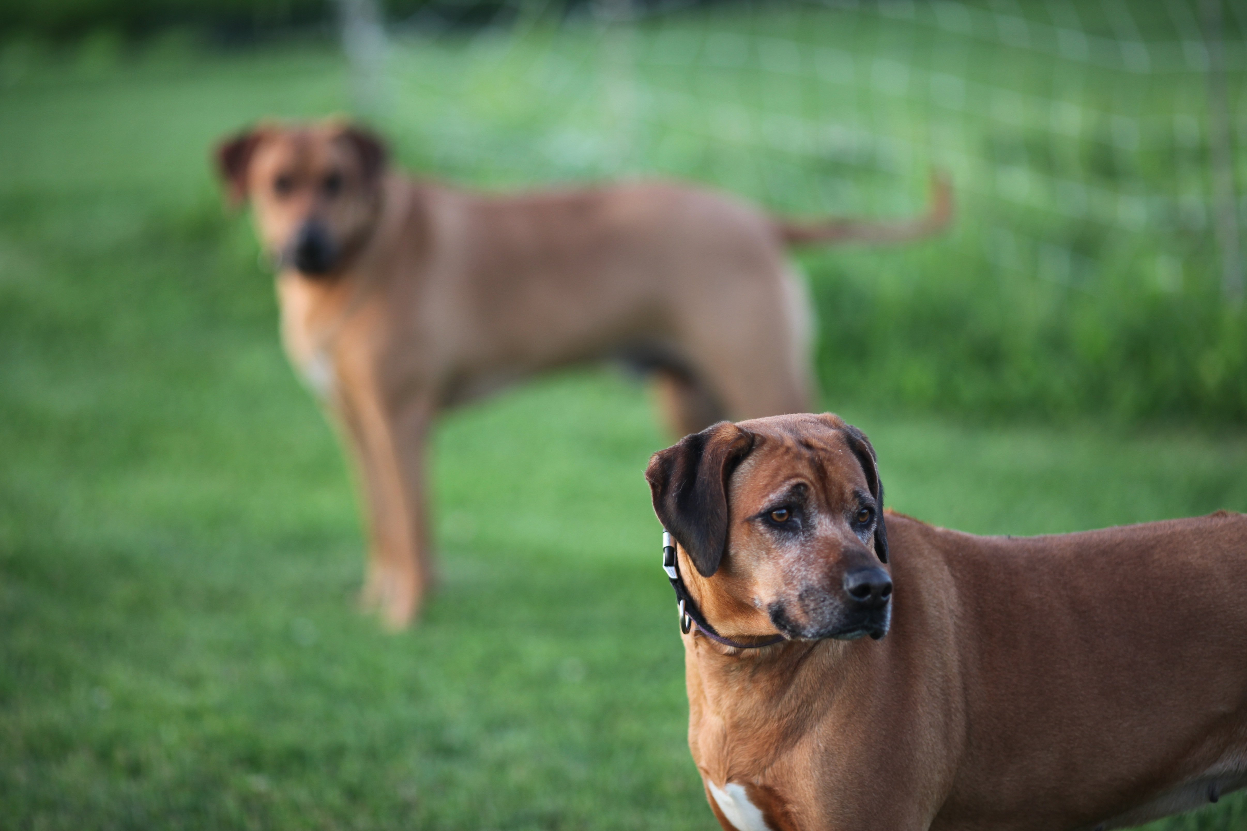 Ranger and Layla 7-14