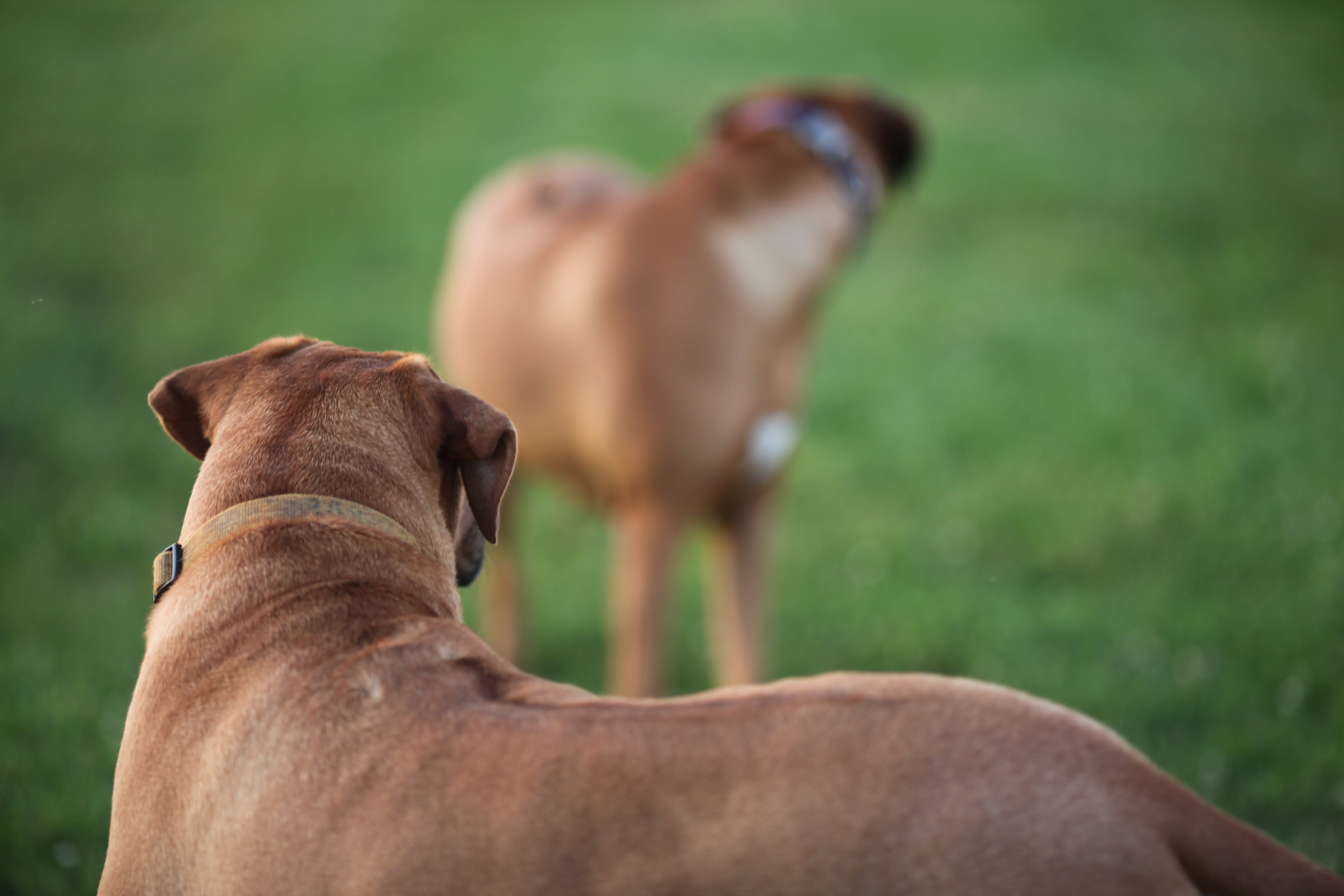 the dogs from behind